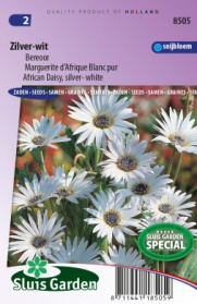 African Daisy, silver- white