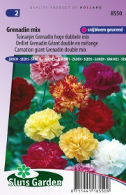 Carnation giant Grenadin double mix