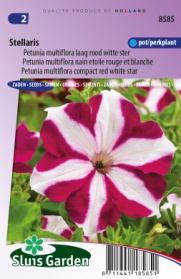 Petunia Stellaris, red white star