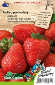 Strawberry large fruited Grandian F1