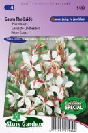 Gaura The Bride, white