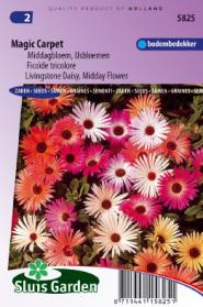 Livingstone Daisy Magic Carpet mix