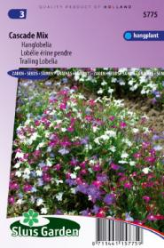Lobelia (trailing) Cascade Mix