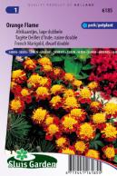 Marigold, French dwarf double Orange Flame