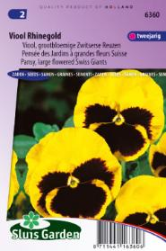 Pansy Swiss Giants Rhinegold