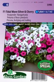 Petunia, hedging and trailing F1 Tidle Wave SIlver & Cherry
