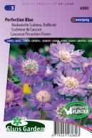 Duifkruid Perfection Blue (Scabiosa)