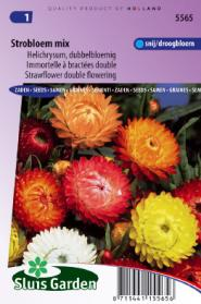 Strawflower Double Mix