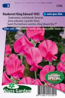 Sweet pea King Edward the 7th 1903 (Heirloom variety)