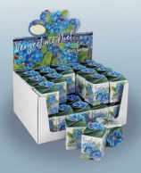 Greengift, Forget-me-not 40 pcs in showbox