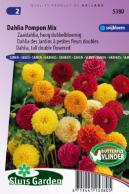 Dahlia tall double Pompon Mix